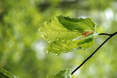 Blatt nach Regen Lizenzfreies Stockfoto
