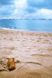 Blatt am Strand Stockfotografie