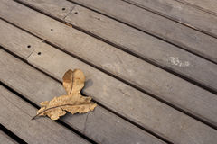 Blatt trocken auf dem Bodenholz Lizenzfreie Stockfotos