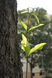 Blatt und Bäume Lizenzfreie Stockbilder