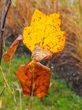 Blatt und Baum im Herbst Lizenzfreies Stockfoto