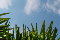 Blatt und blauer Himmel Stockbild