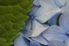 Blatt und Blumen Stockfotos