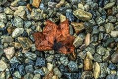 Blatt und Felsen Stockbilder