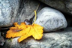 Blatt und Felsen Stockfoto