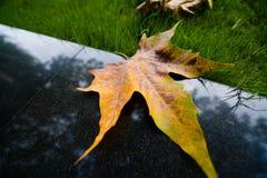Blatt und grünes Gras Lizenzfreie Stockfotografie