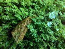 Blatt und Gras lizenzfreies stockfoto