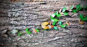 Blatt und Holz Lizenzfreies Stockfoto
