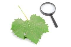 Blatt und Vergrößerungsglas des flachen Baums Stockfotos