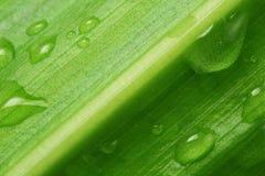 Blatt- und Wassertropfen Lizenzfreie Stockfotos