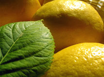 Blatt und Zitronen lizenzfreie stockbilder