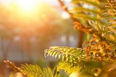 Blatt unter Sonnestrahl Stockfotos