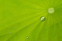 Blatt von waterlily mit Tau Lizenzfreie Stockbilder