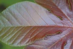 Blatt von wild wachsenden Pflanzen Stockfotos