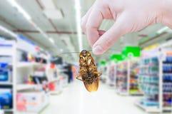 Blatta della tenuta della mano nel supermercato Fotografia Stock