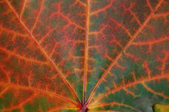 Blattbeschaffenheit im Herbst Lizenzfreies Stockbild