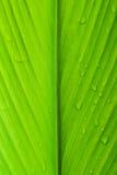 Blattbeschaffenheit mit Wassertropfen Schließen Sie herauf Schuss Stockfotografie