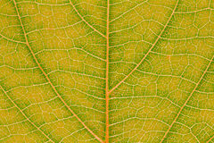 Blattbeschaffenheits-Musterhintergrund für Grafikdesign Lizenzfreies Stockfoto