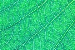 Blattbeschaffenheits-Musterhintergrund für Grafikdesign Stockfotos