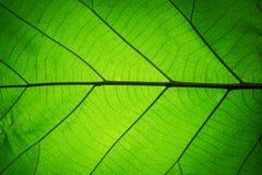 Blattbeschaffenheitsmuster-Frühlingshintergrund Lizenzfreie Stockfotos