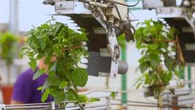 Blattbeschneidungsmaschine, automatische Blattbeschneidungsmaschine, Fördererlinie stock video footage
