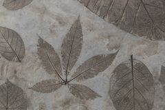 Blattdetail wurde auf dem Betondeckeboden gestempelt stockbild