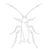 Blattella germanica. cockroach. Sketch of cockroach. cockroach  on white background. cockroach Design for coloring book. Stock Photo