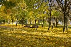 Blattfall in Herbstpark Lizenzfreie Stockbilder