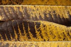 Blattfarbe von der Natur lizenzfreie stockbilder