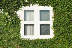 Blattfenster stockfotografie