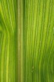 Blattfragment Stockbild