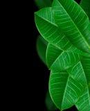 Blattgrün lizenzfreie stockfotos