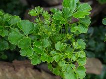 Blattgrün stockbilder