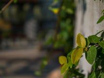 Blattgrün stockfotos