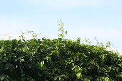 Blattgrün mit Sonnenlicht über blauem Himmel im Park lizenzfreie stockfotografie