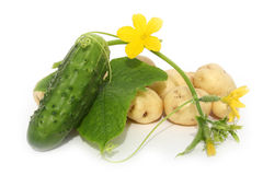 Blattgrün und eine Gurke Stockfoto