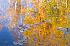 Blatthin- und herbewegung auf Wasser. Stockfotos