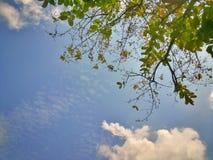 Blatthintergrund des blauen Himmels und des Grüns Stockfoto