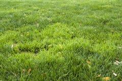 Blatthintergrundmuster des grünen Grases und des Gelbs Lizenzfreie Stockbilder