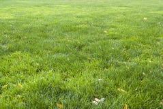 Blatthintergrundmuster des grünen Grases und des Gelbs Stockbild