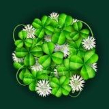 Blattklee mit den weißen Blumen, vereinbart im Kreis für St- Patrick` s Tag Stockbild