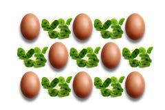 Blattklee und -eier Lizenzfreies Stockfoto