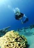 Blattkoralle und Unterwasseratemgerättaucher Lizenzfreie Stockfotografie