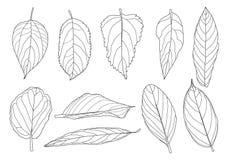 Blattlinie einzelnes Blatt und Blattmusterschwarzes holen, um zu färben, auf weißem Hintergrund zu verzieren lizenzfreie abbildung