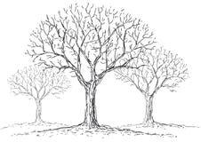 Blattlose Bäume Stockbilder