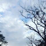 Blattlose Bäume Lizenzfreie Stockfotos