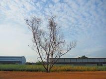 Blattlose Bäume der Hintergrund ist der blaue Himmel und zeigt den Anfang des Winters an Stockbilder