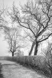 Blattlose Bäume mit gekrümmten Niederlassungen Stockbilder