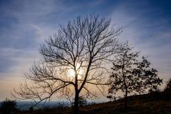 Blattlose Bäume und Himmel in der Hintergrundbeleuchtung Lizenzfreies Stockbild