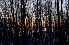 Blattlose Bäume und Sonnenuntergang Lizenzfreies Stockfoto